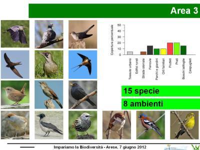 Esempio di restituzione dei risultati dei rilevamenti di Uccelli fatti con i ragazzi