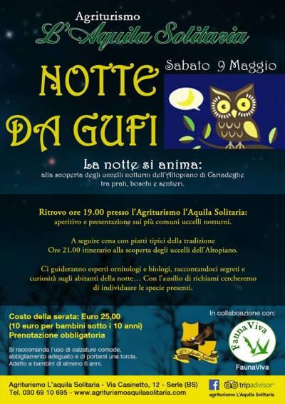 Locandina Notte da Gufi